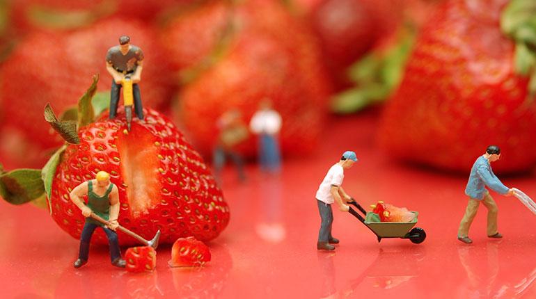 Jordgubbsarbetare
